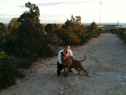 Flash, chien American Staffordshire Terrier