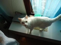 Flash, chat Gouttière