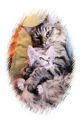 Flaur, chat Norvégien