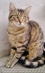 Flcon, chat Gouttière