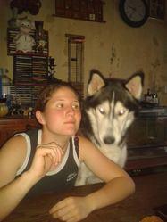 Fleche, chien Husky sibérien