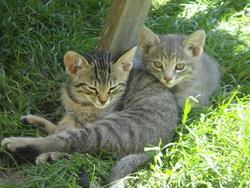 Fléche Et Félix, chat