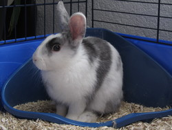 Flocon, rongeur Lapin