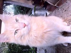 Flocon, chat Gouttière