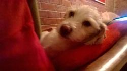 Flocon, chien