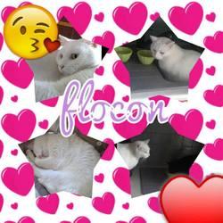 Flocon, chat