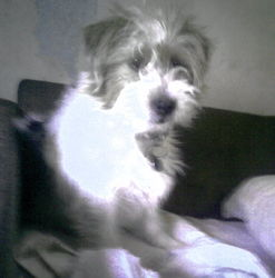 Flora, chien