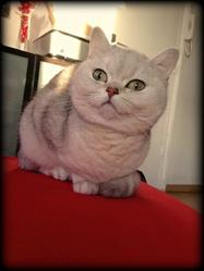 Flora, chat Gouttière