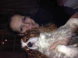 Flora, chien Cavalier King Charles Spaniel