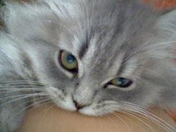 Florine, chat