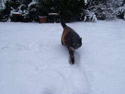 Florise, chat Gouttière