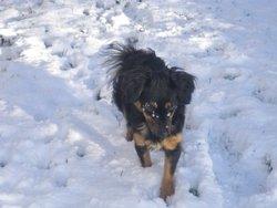 Floyde, chien