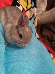 Fluffy, rongeur Lapin