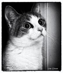 Folie, chat