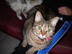 Folie, chat Gouttière