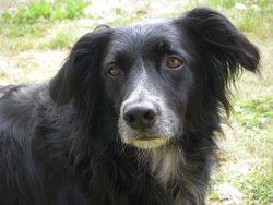 Fonzy, chien