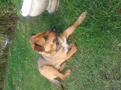 Foster, chien