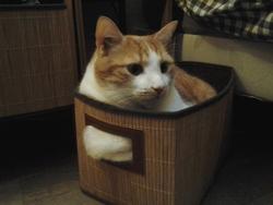 Fotsy, chat Gouttière