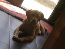 Foudzy, chien