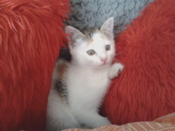 Fouiny, chat