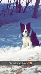 Fouzia, chien Border Collie