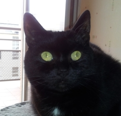 Foxie, chat Gouttière