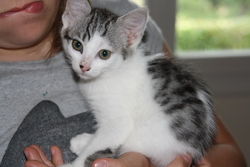 Franboise, chat Gouttière