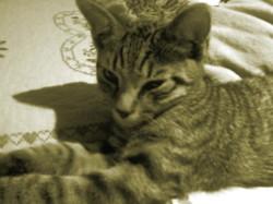 Franck, chat
