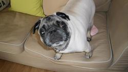 Frank, chien Carlin