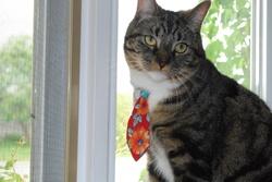 Fred, chat Gouttière
