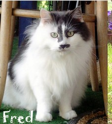 Fred, chat