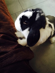 Freddy, rongeur Lapin