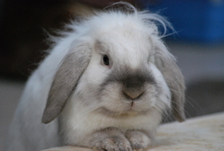 Fredy, rongeur Lapin