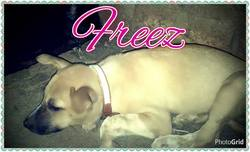 Freez, chien