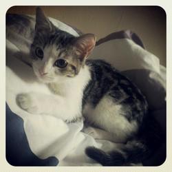 Freya, chat Gouttière