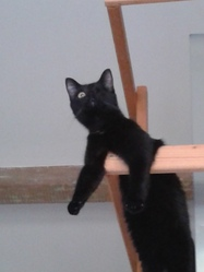 Freyja, chat Gouttière