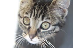 Frimousse Décédé Le 18 01 2015, chat Européen