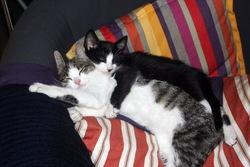 Frimousse, chat Gouttière