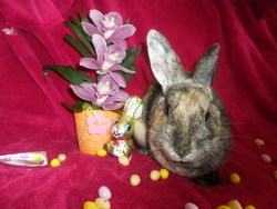 Frimousse, rongeur Lapin