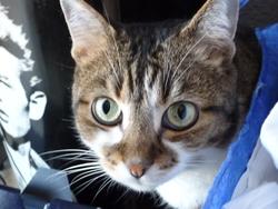 Frimousse Dit Moumousse, chat Gouttière