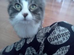 Fripon, chat