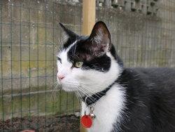 Fripon, chat Gouttière
