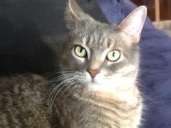 Friponne, chat Gouttière