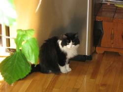 Fripouiile Ti-Mine, chat Gouttière