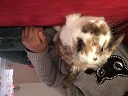 Fripouille, chien Schipperke