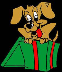 Fripoune, chien Shih Tzu