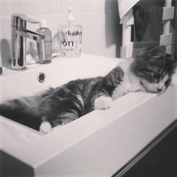 Fripoune, chat