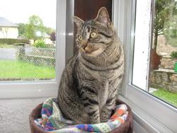 Fripounet, chat Gouttière
