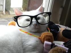 Frisquette, chat