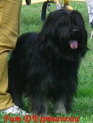 Fum Iii, chien Berger catalan